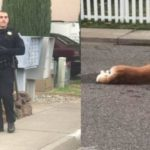 Woman Posts to Facebook about Two Lost Dogs; Cop Arrives and Shoots them