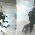 Video of Cop Torturing Man With K9 so Disturbing, He Was Just Sentenced to 30 Months in Prison